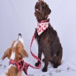 dog bandanas by scrufts